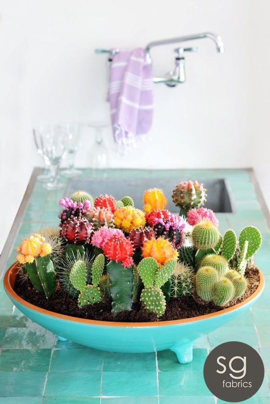SG_Colourful_Cacti