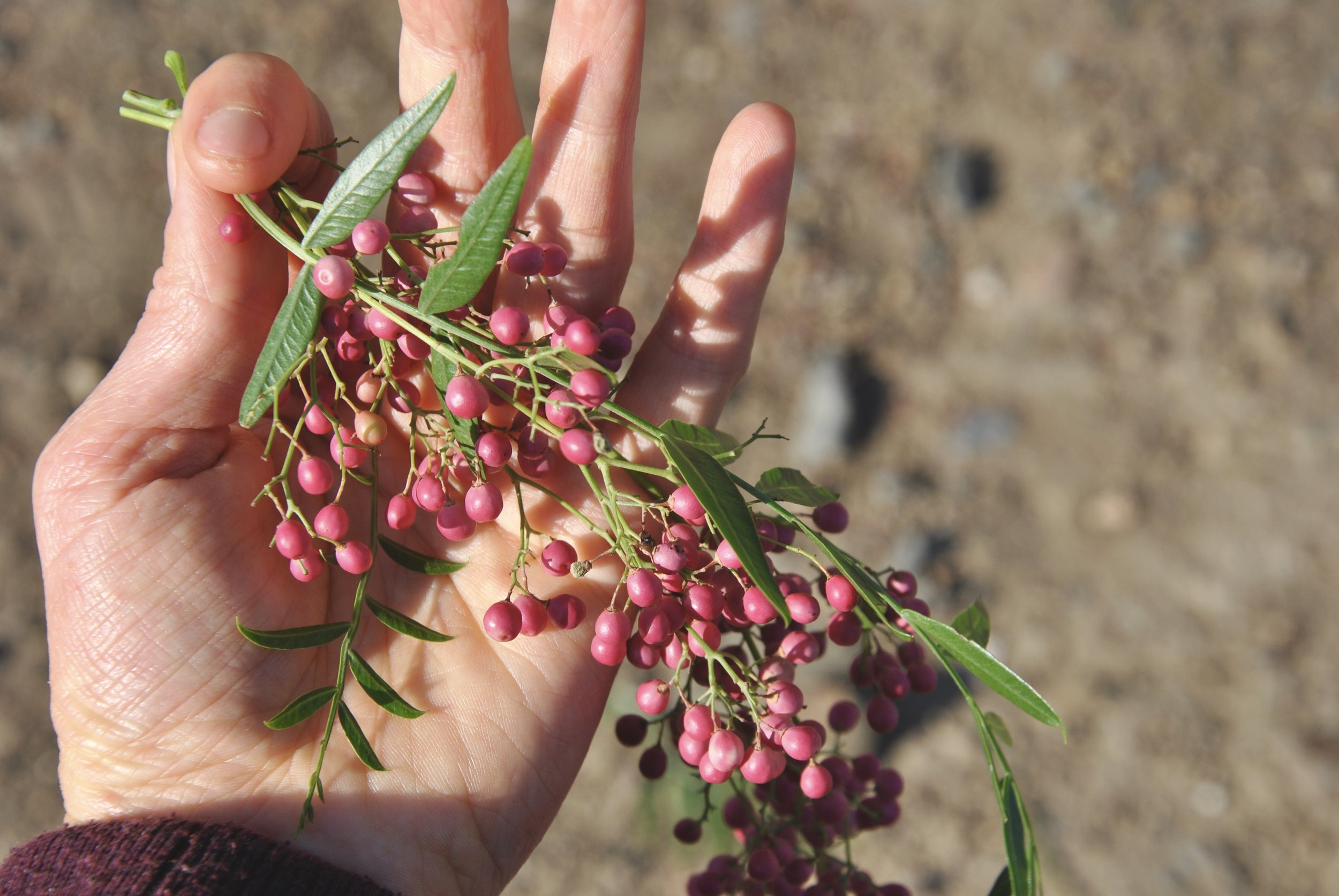 wild-pink-peppercorns