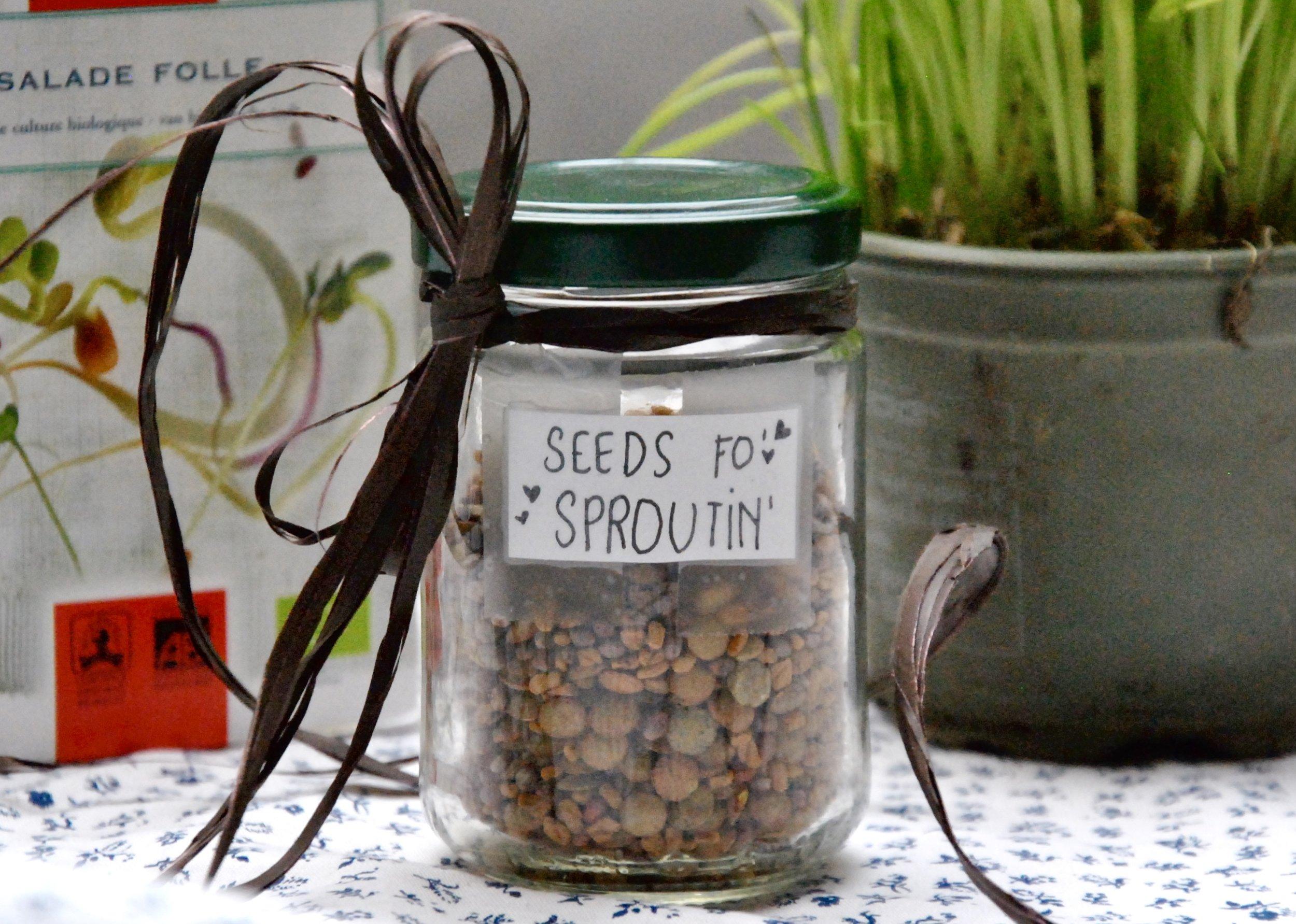 Seeds In A Jar