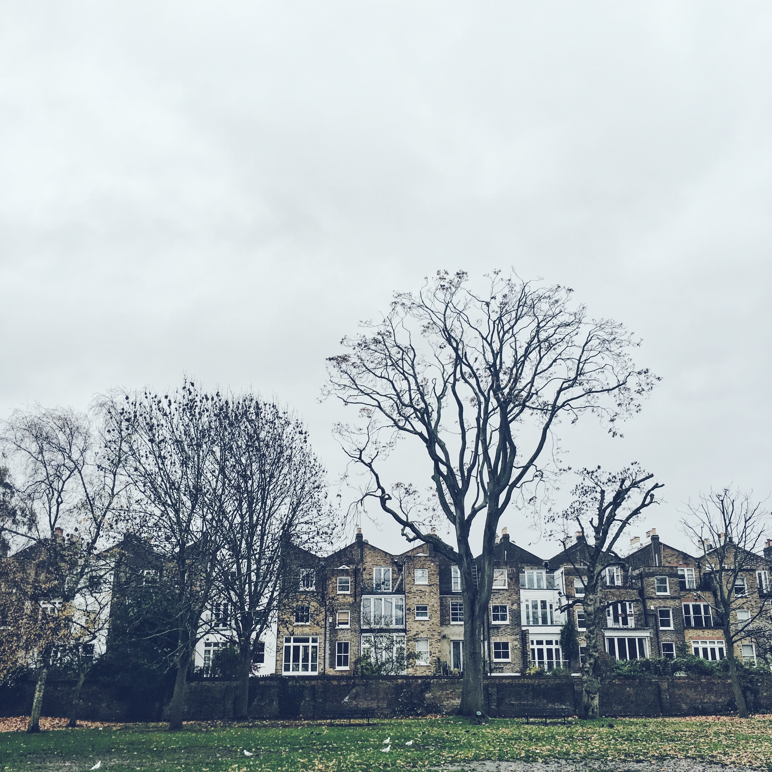 Hammersmith homes overlooking the wintery park.