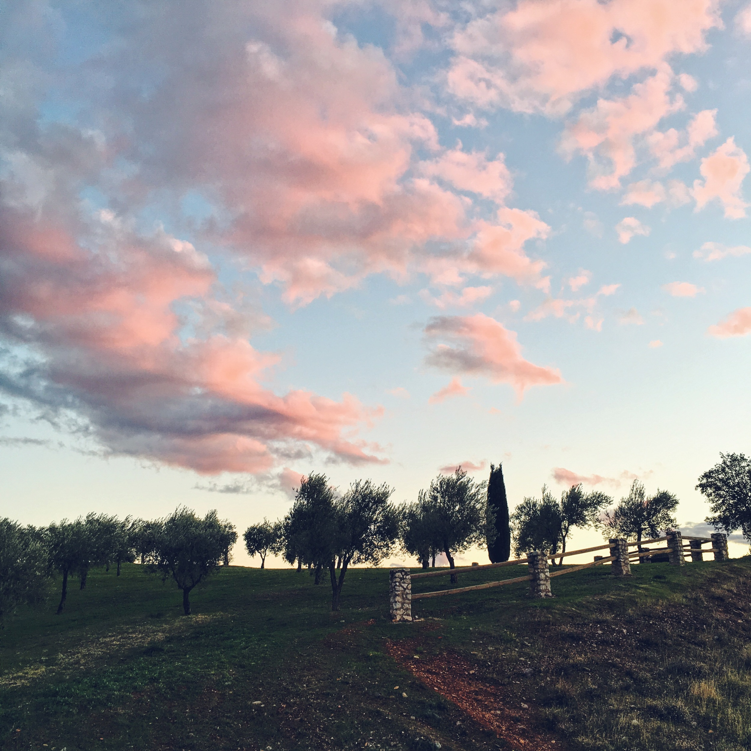Sunset over the olive grove in Granda Spain