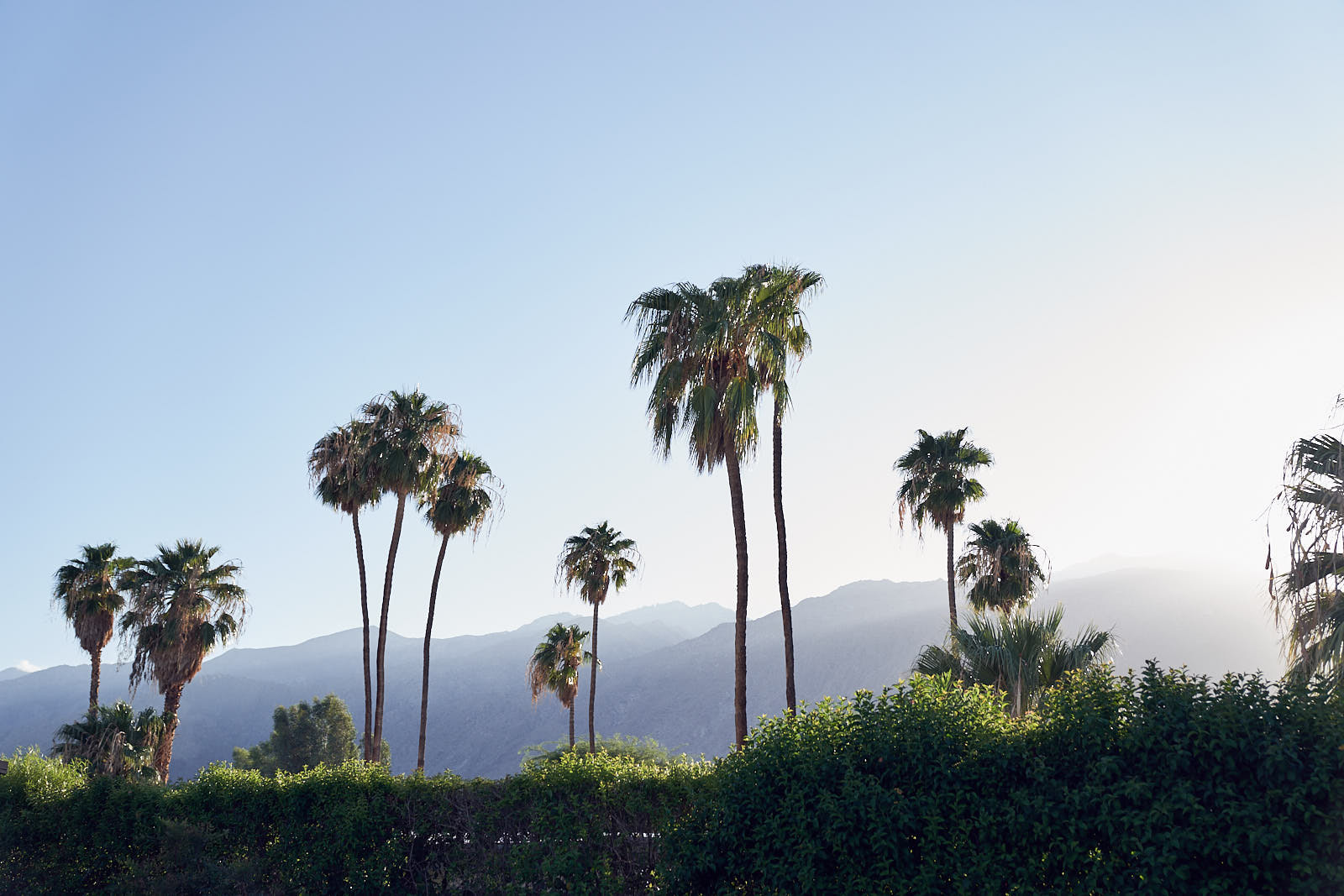 BEAR launch Frank Sinatra's House Palm Springs by Lost In Love Photography