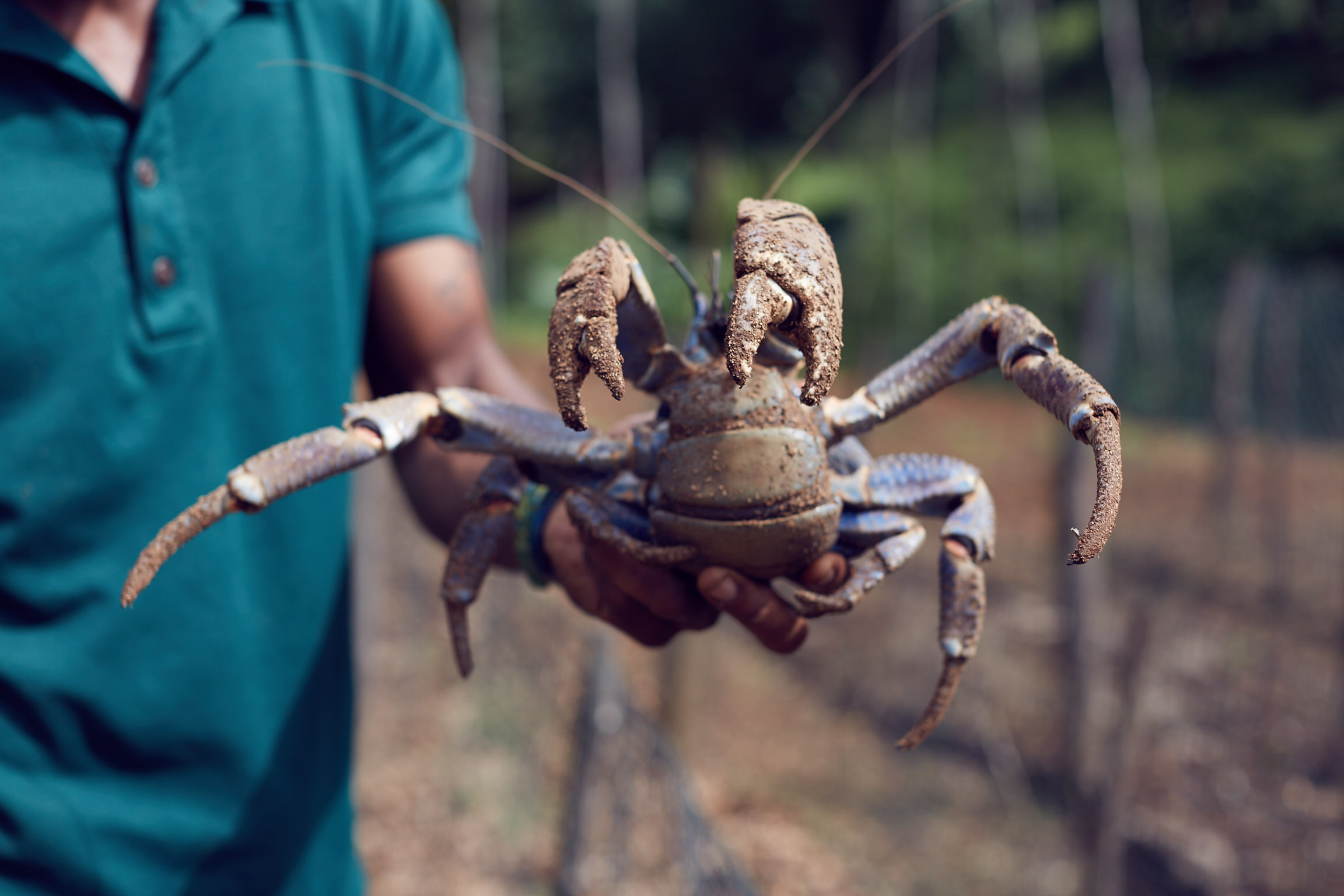 Laucala Island coconut crab with chef Jean Luc Amann. Photos by Lost In Love Photography