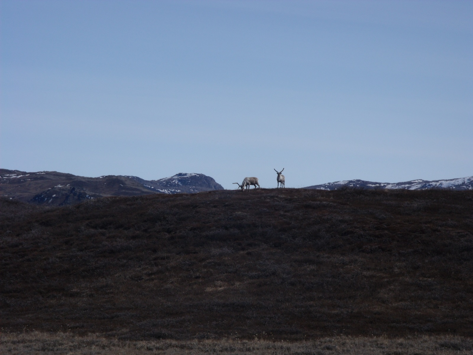 Greenland 2011 096.jpg