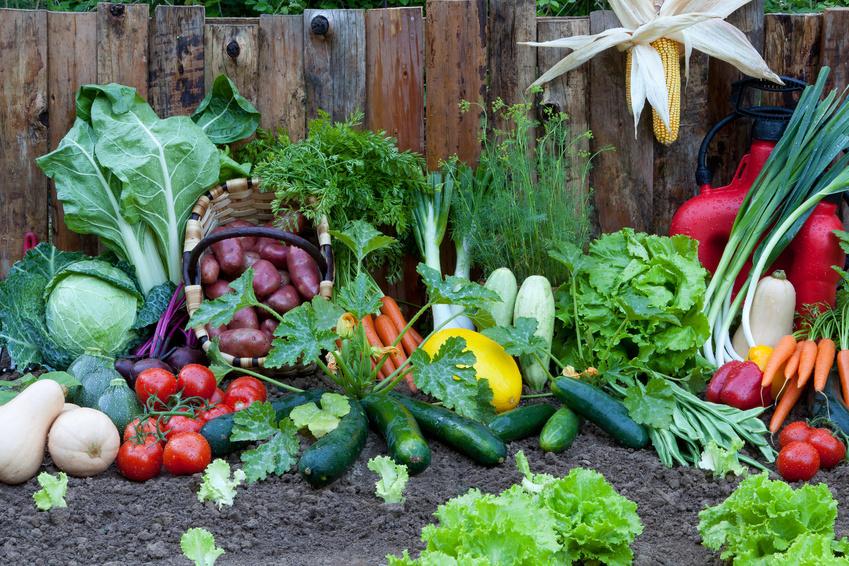 Sioban's kitchen garden in Cortona Tuscany