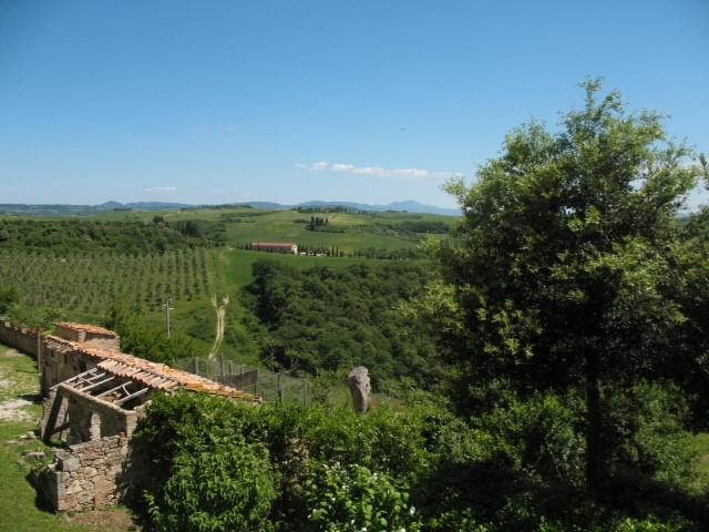 cortona-vineyard-view.jpg
