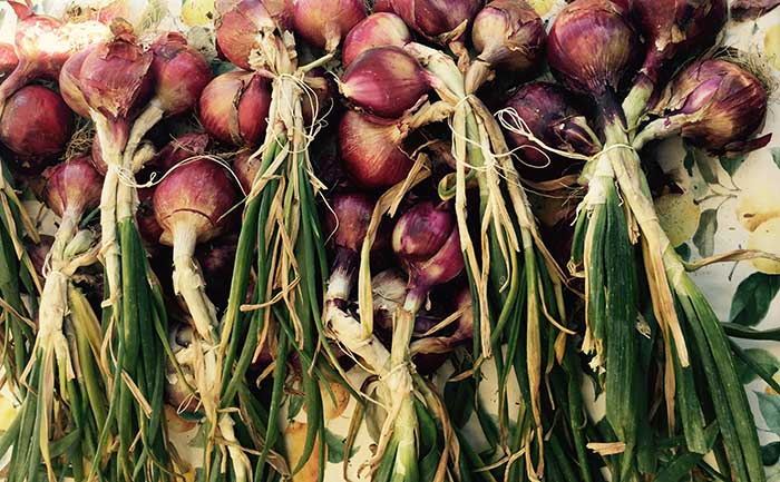 Beautiful red onions, lovely and sweet!