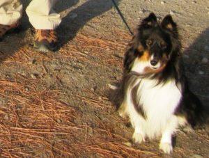 Dogs-on-KVR.jpg
