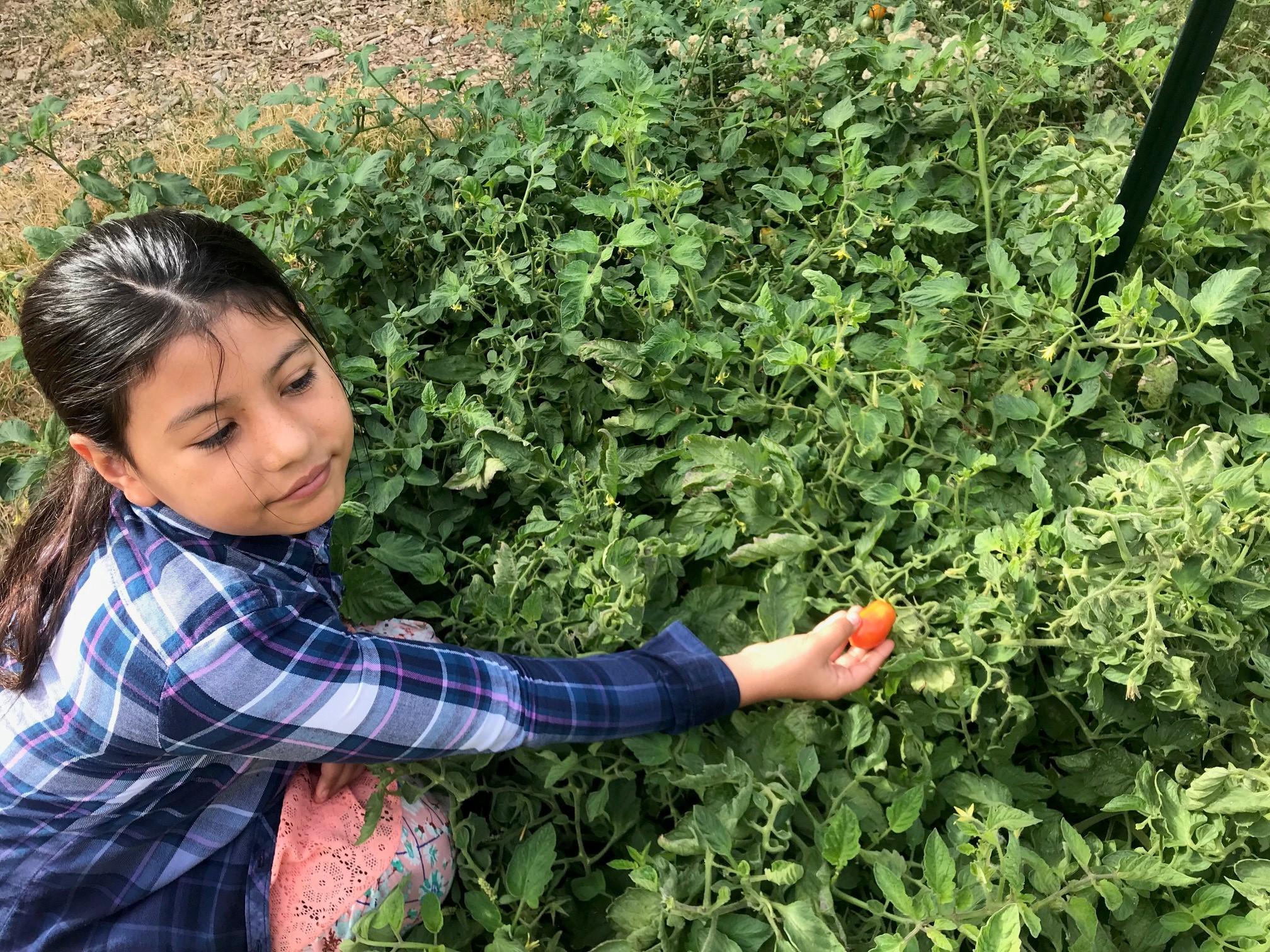 Baylina_tomatoes.jpg