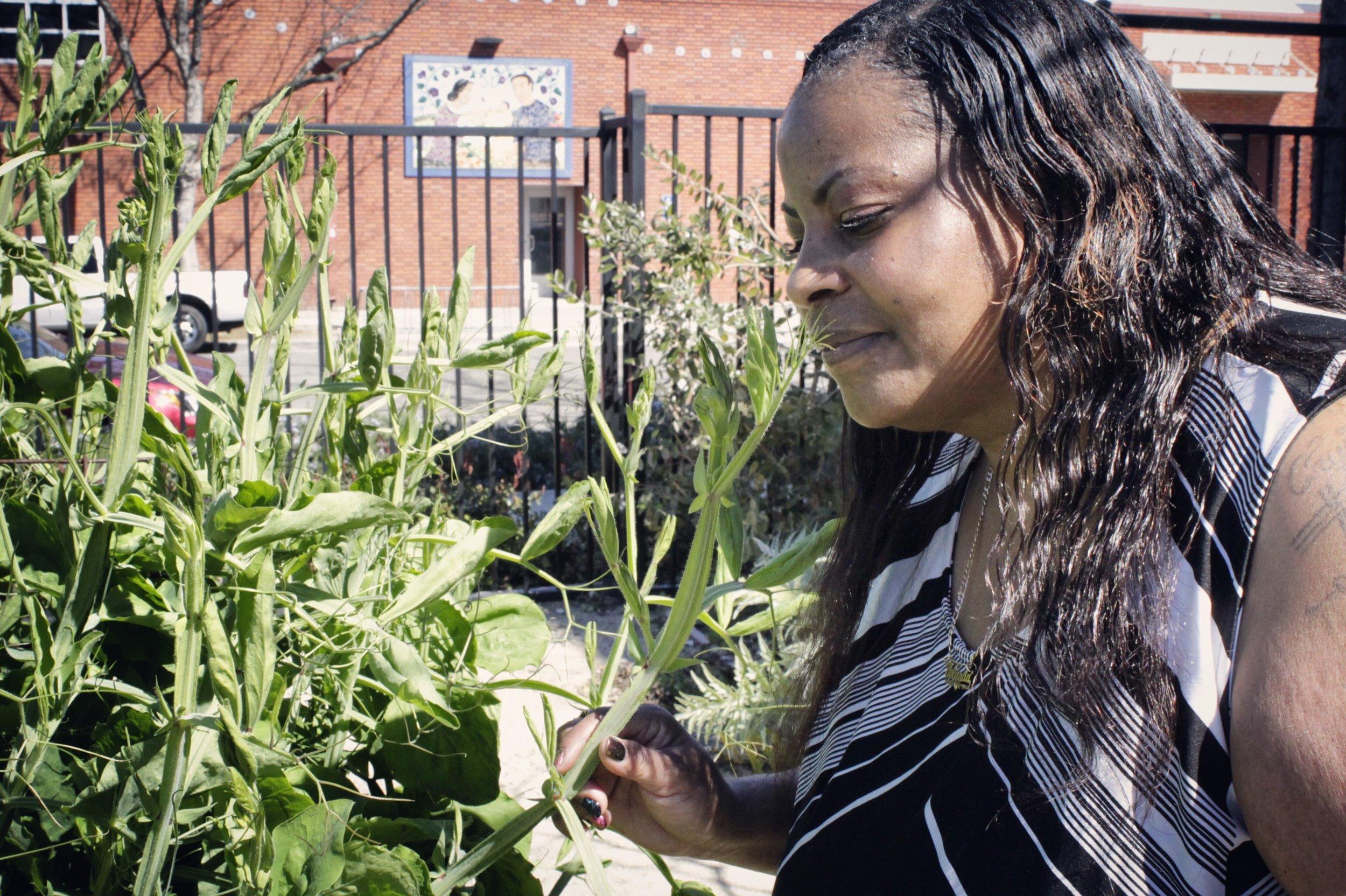 Yolanda garden2.jpg