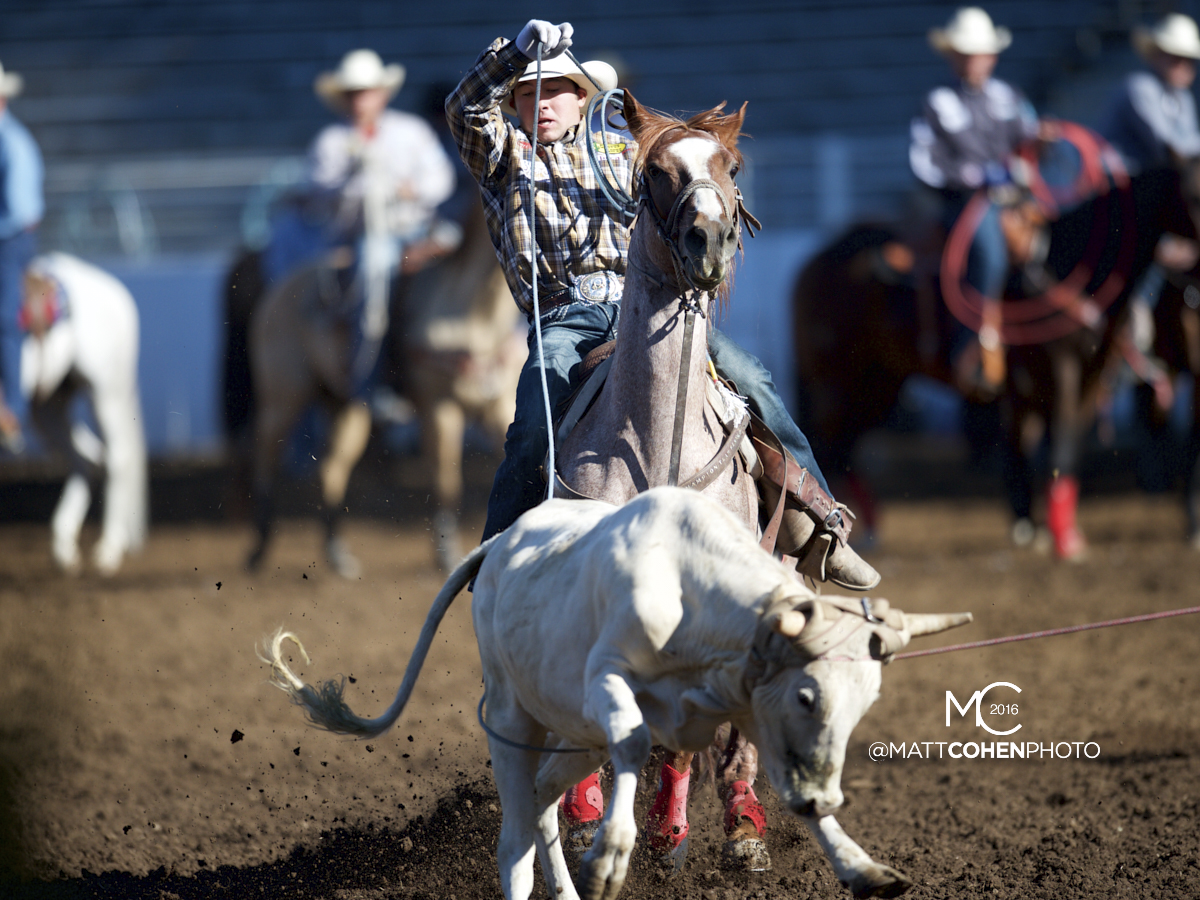 2016 WNFR: Wrangler National Finals Rodeo Qualifiers: Team Roping Heelers #13 Quinn Kesler