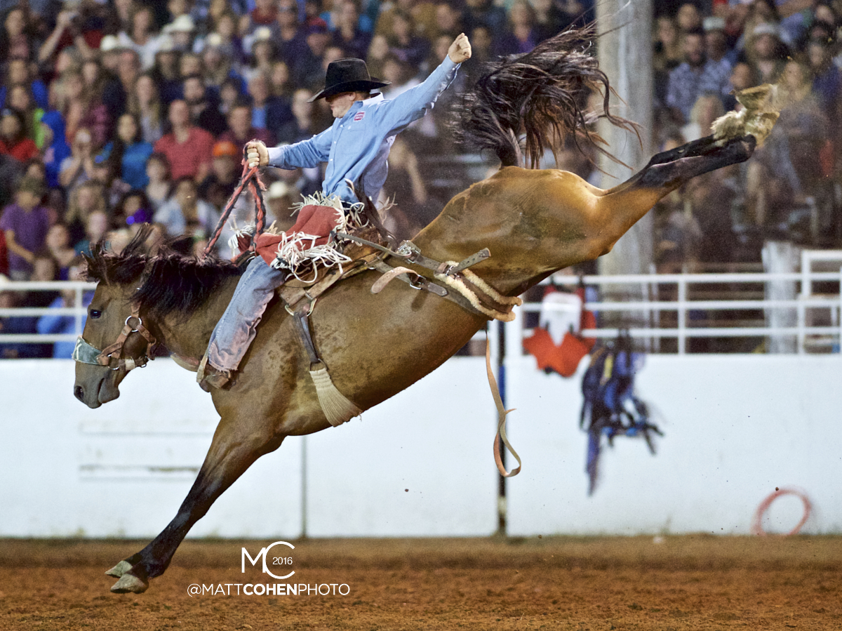 2016 WNFR: Wrangler National Finals Rodeo Qualifiers: Saddle Bronc #12 Sterling Crawley