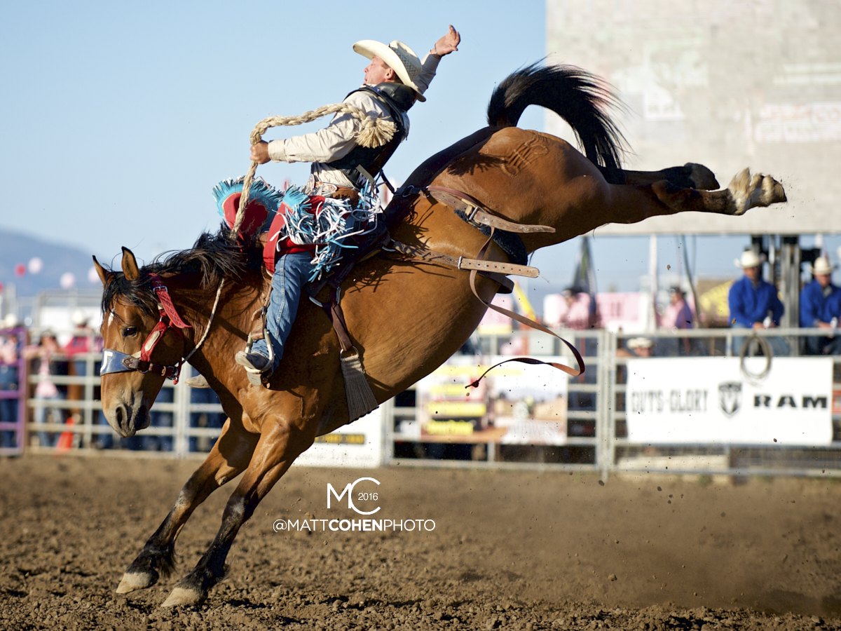 2016 WNFR: Wrangler National Finals Rodeo Qualifiers: Saddle Bronc #11 Cody Wright