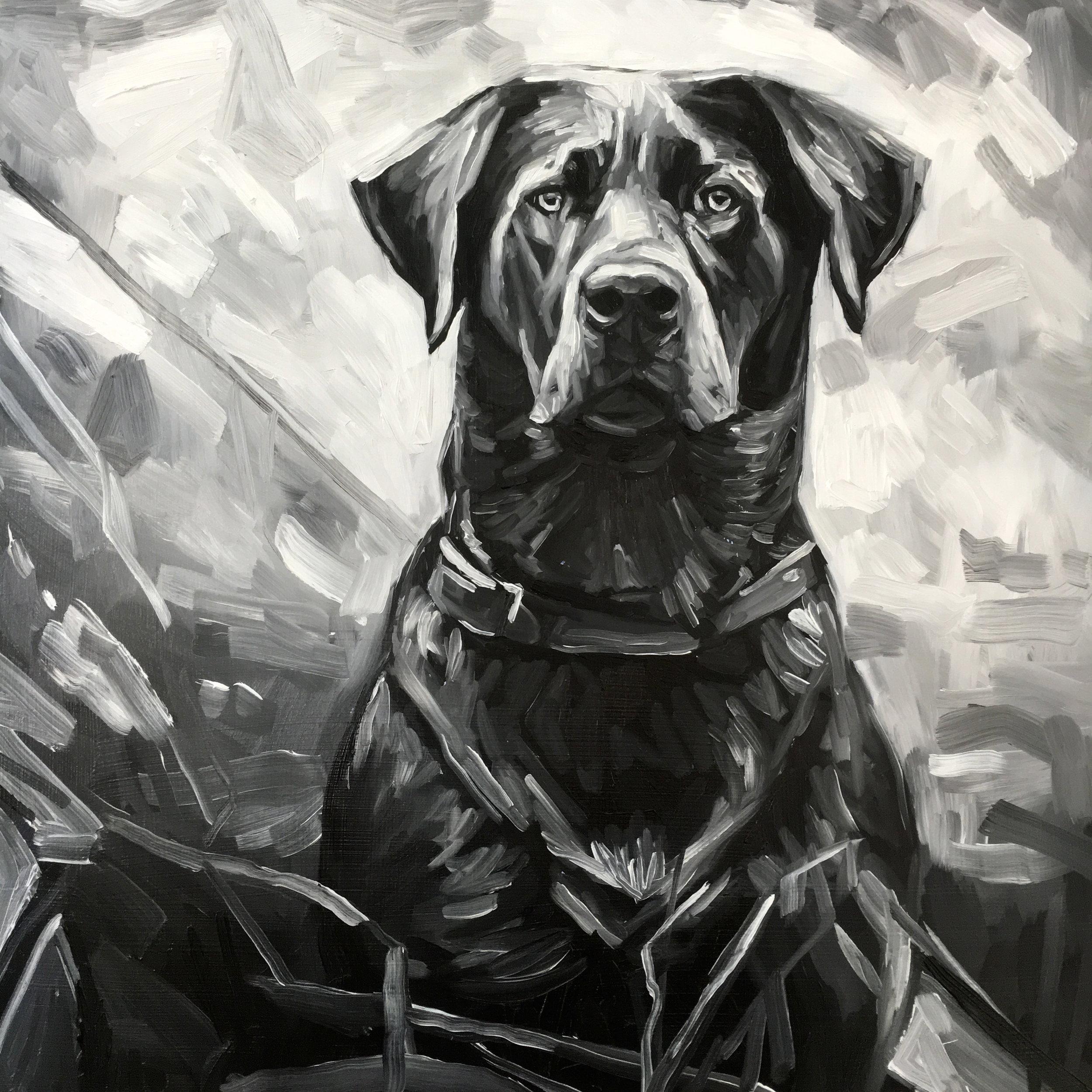 Dog by Kate Mullin.jpg