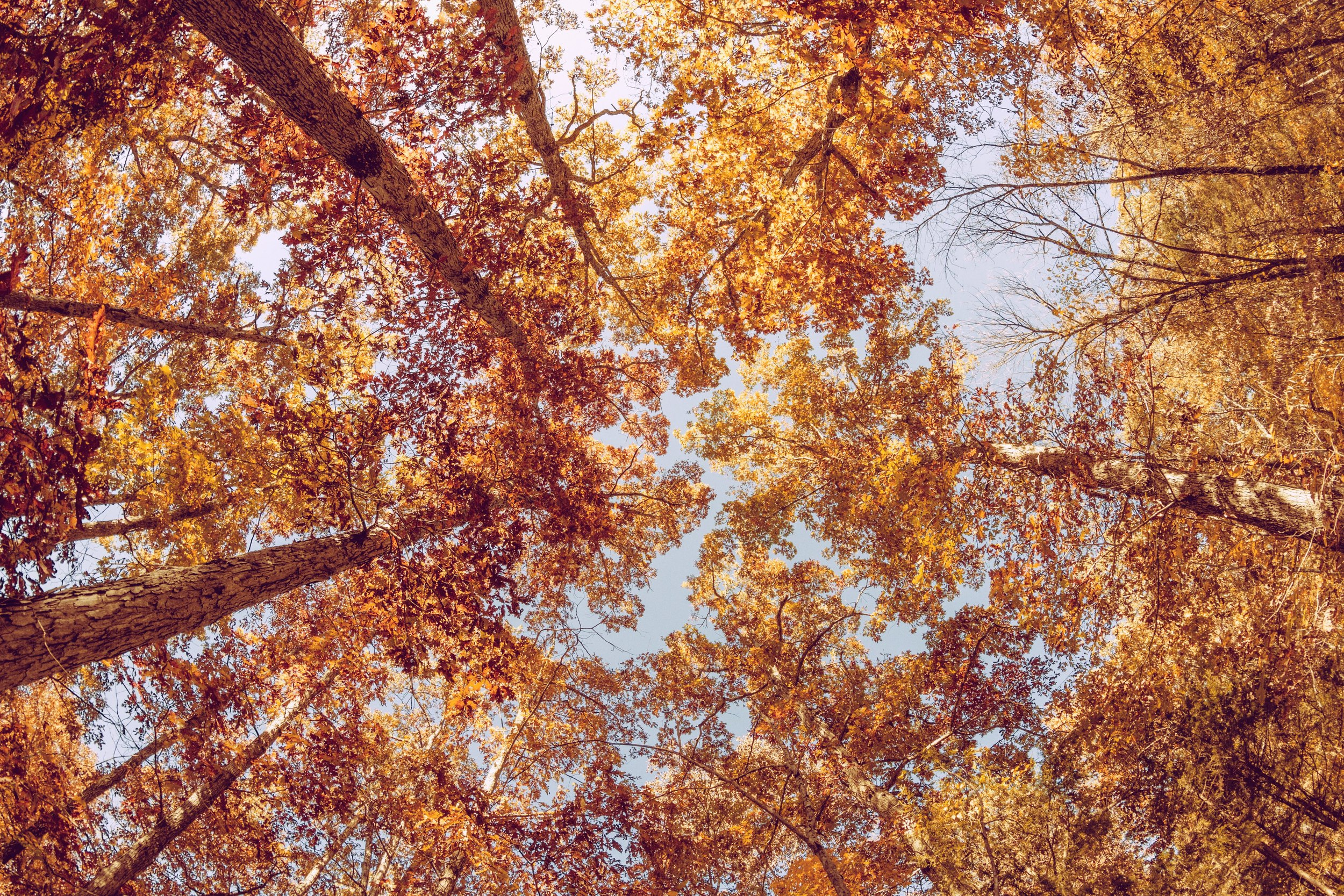 Forest in the Fall. Photo by  Charles Yeager