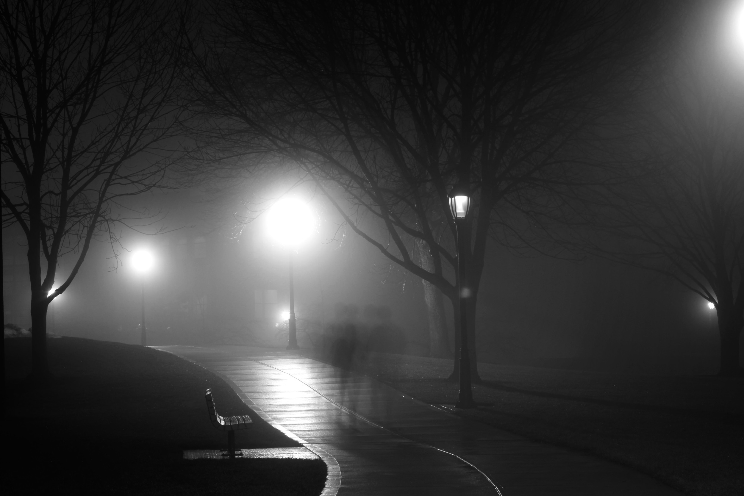 A lost soul followed Nerida home from work. Pic by  Jesse Bowser .