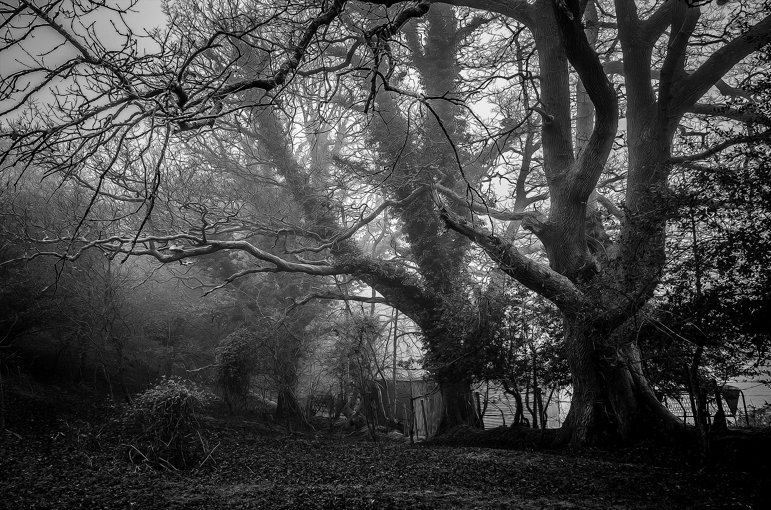 Energy could be stored within a tree. Ancient trees photo by  Richard Loader .