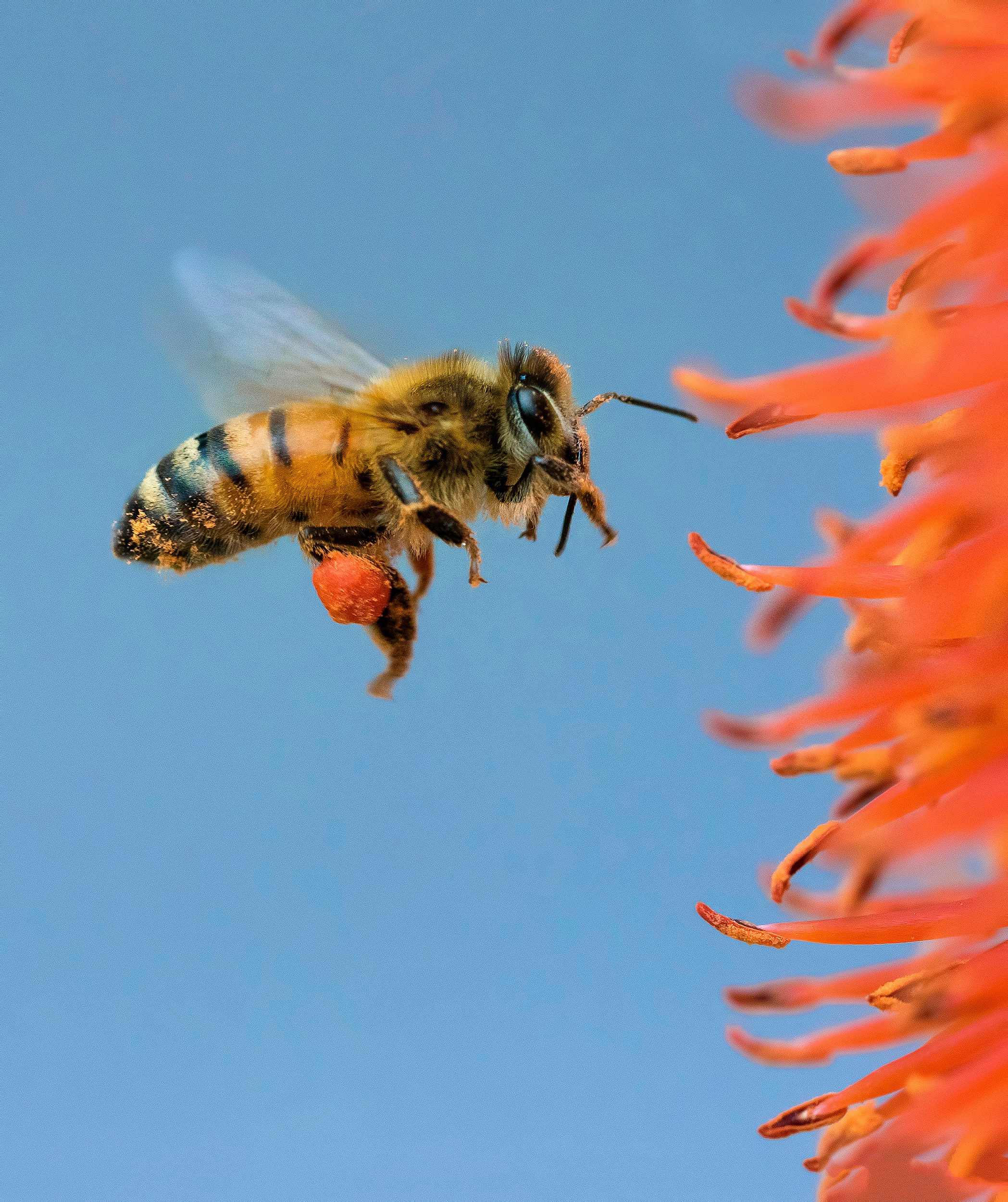 """""""You don't have to be that bee."""" Photo by  Pedro Lastra."""
