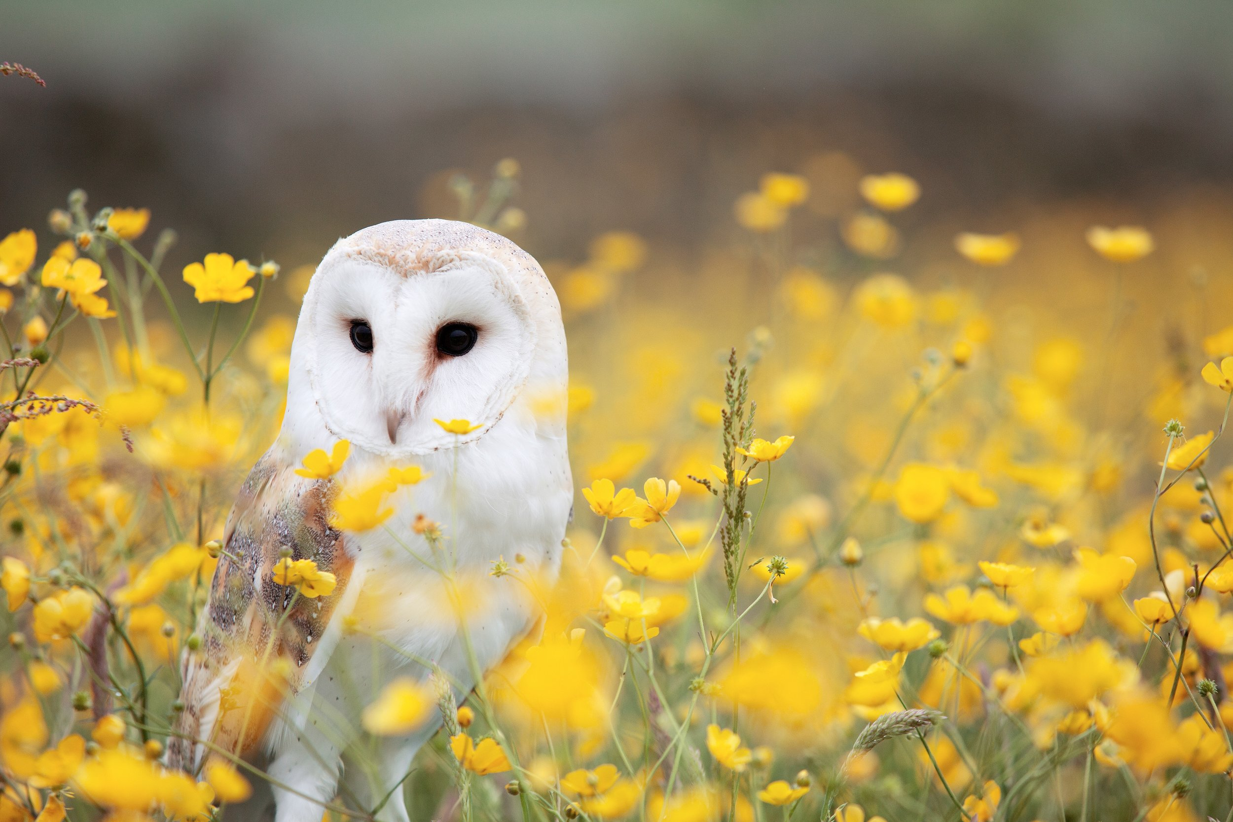 Beautiful owl pic by  Andy Chilton .