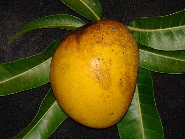 Beautiful yellow-fleshed Alphonso mango. Photo by  Asit K. Ghosh Thaumaturgist .