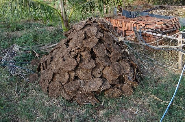A pile of…cow dung. Photo by  Bishnu Sarangi .