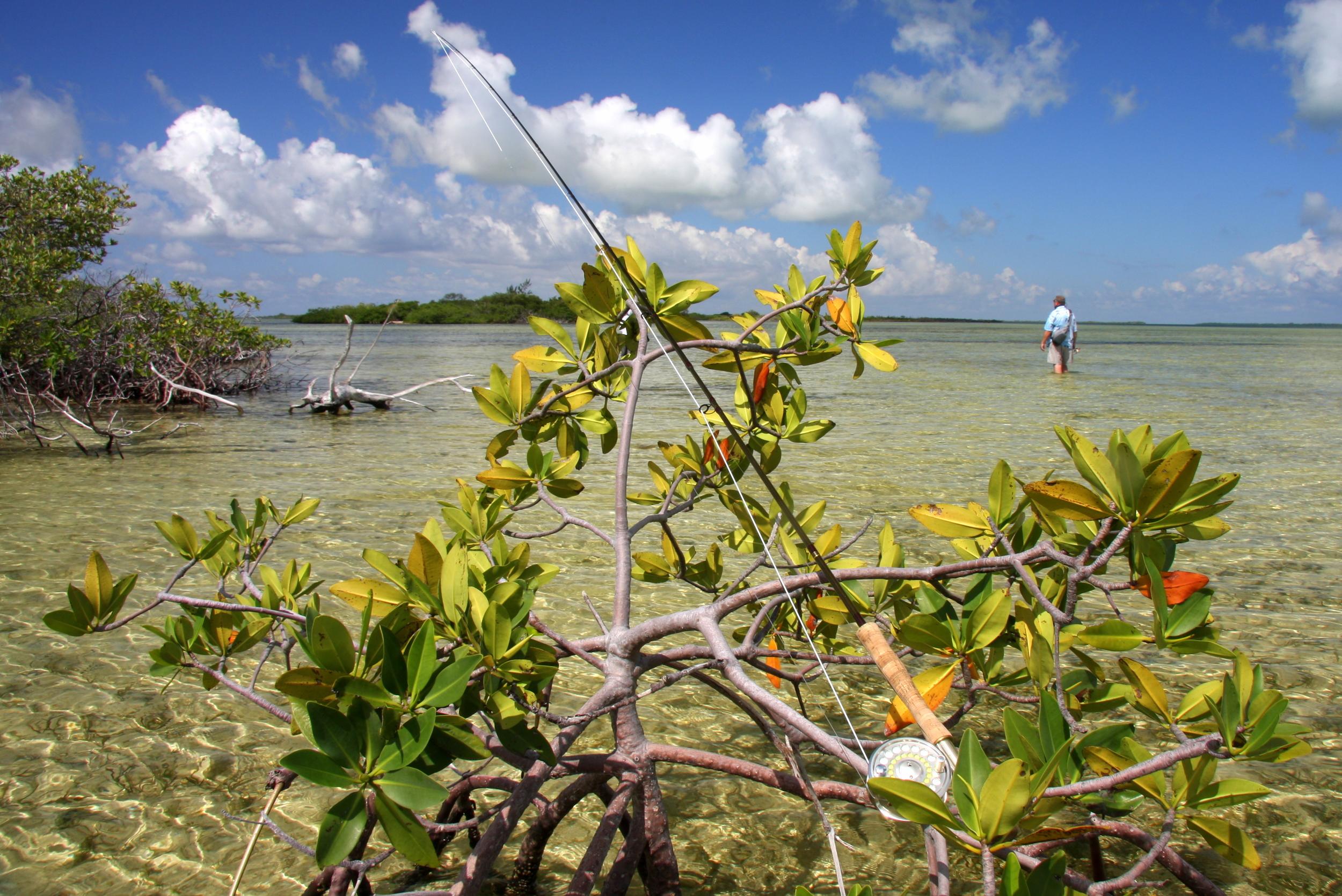 Flats Fishing - Ascension Bay