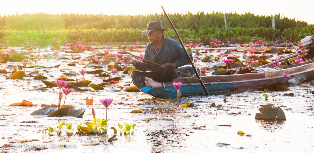 Fishing for snakehead local-style amongst the lotus flowers.