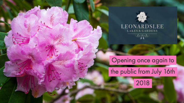 Rhododendron's are a famous feature of Leonardslee thanks to the Loder family connection.