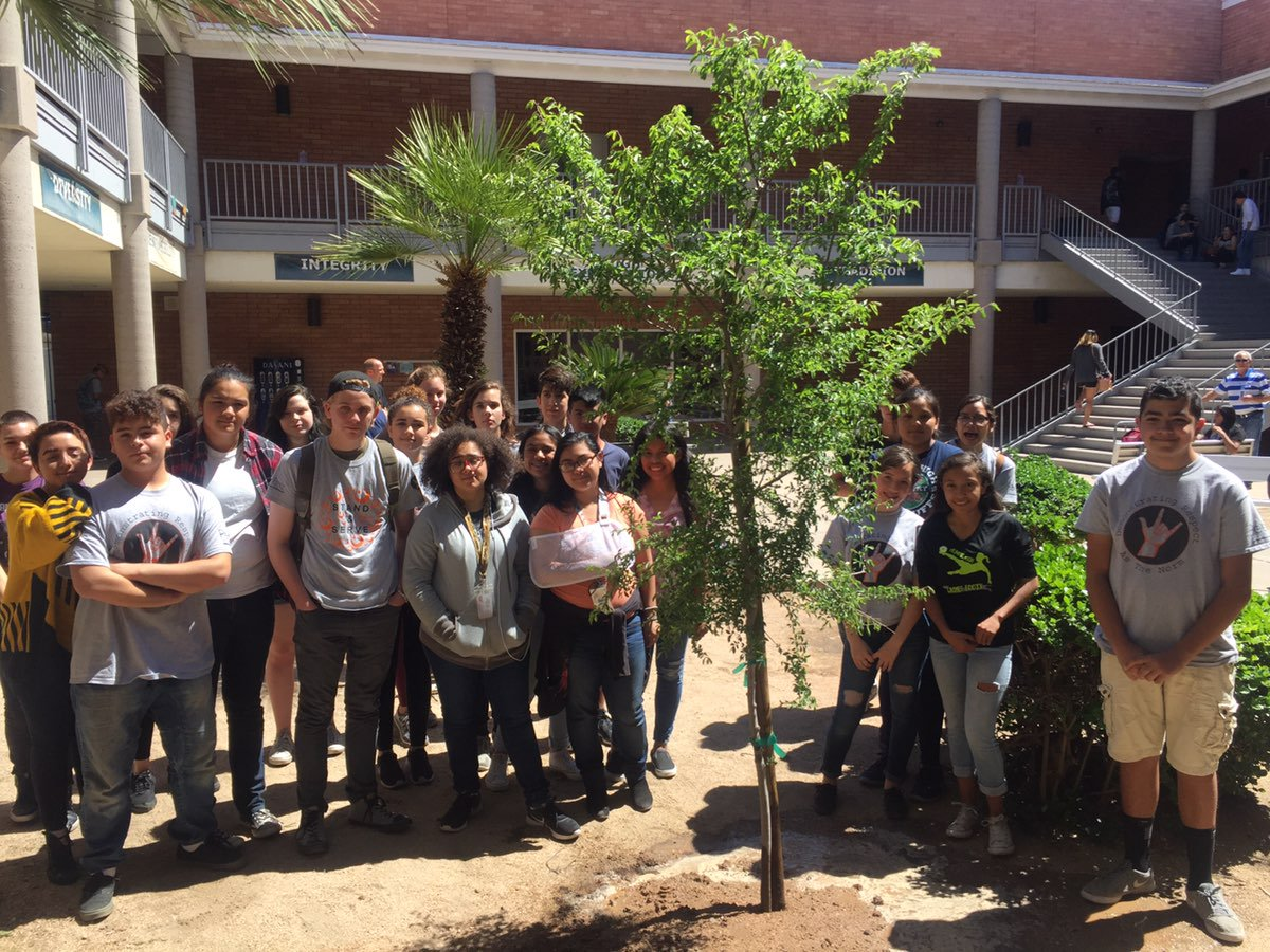 Tree planted in honor of Doctor Eileen Yellin 2017 - Tempe High School We Love You Doc! Forever.