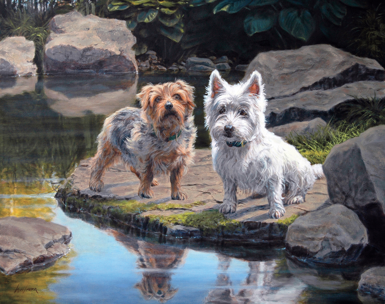 Norfolk and West Highland Terriers