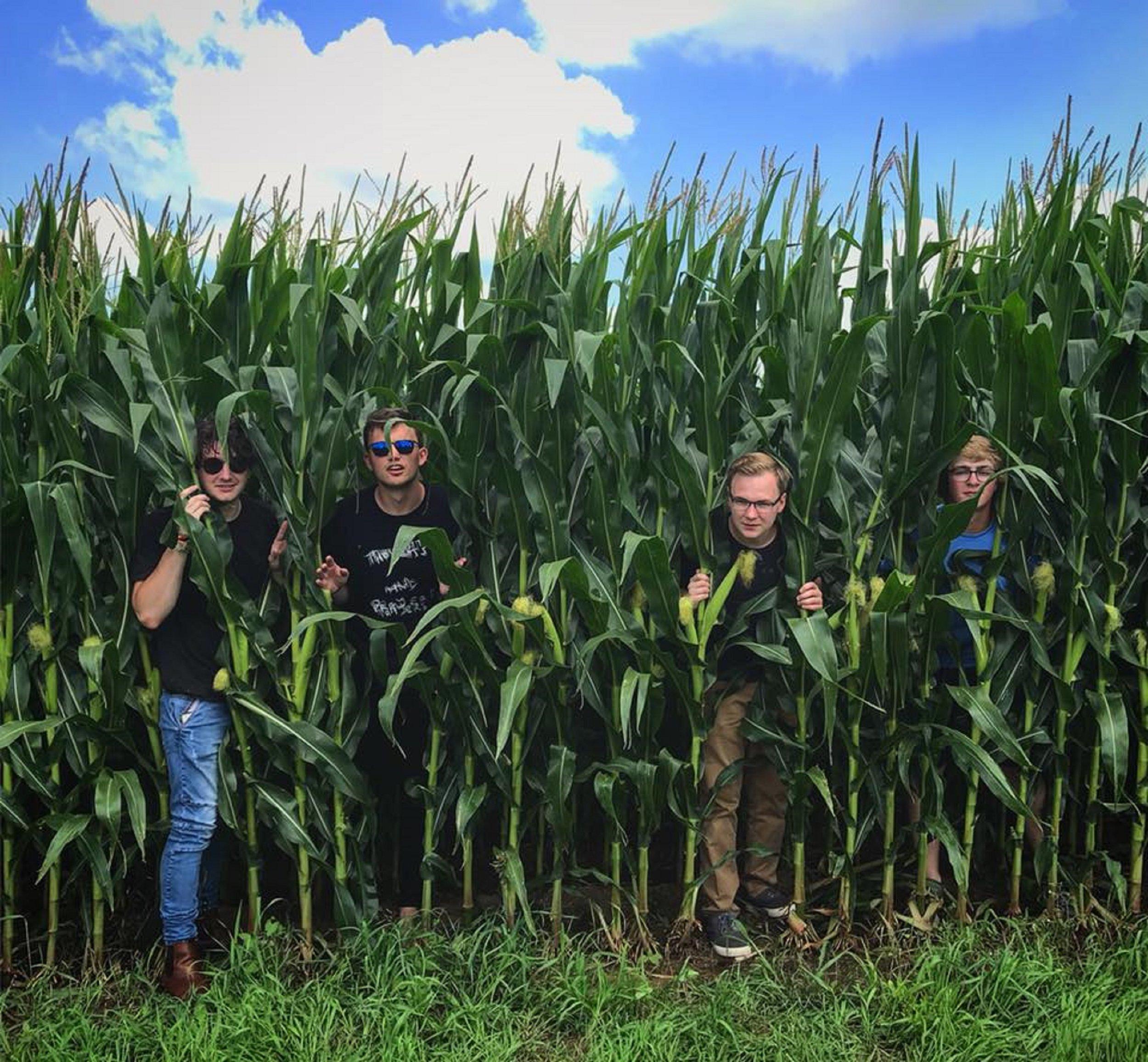 corn - Greentop - band.jpg