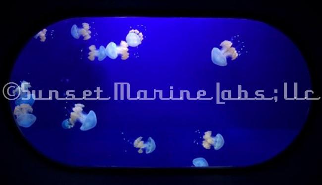 banner_Aquarium1-1.jpg