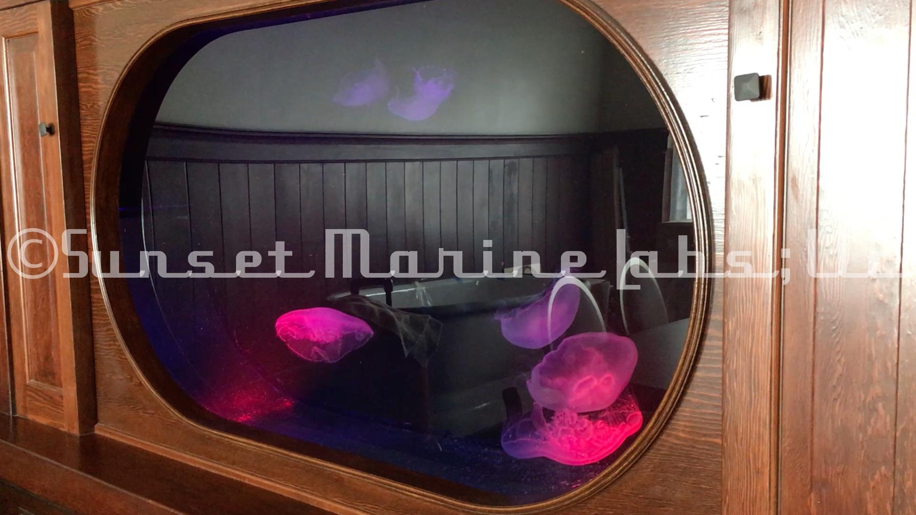 Molina Tank.jpg