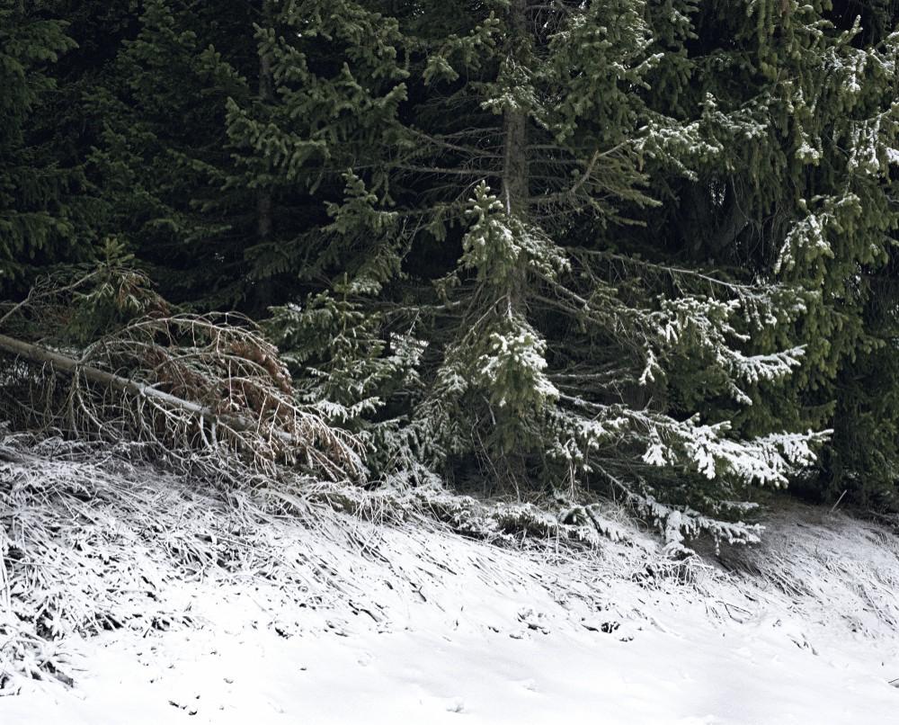 Artificial Snow, 2011