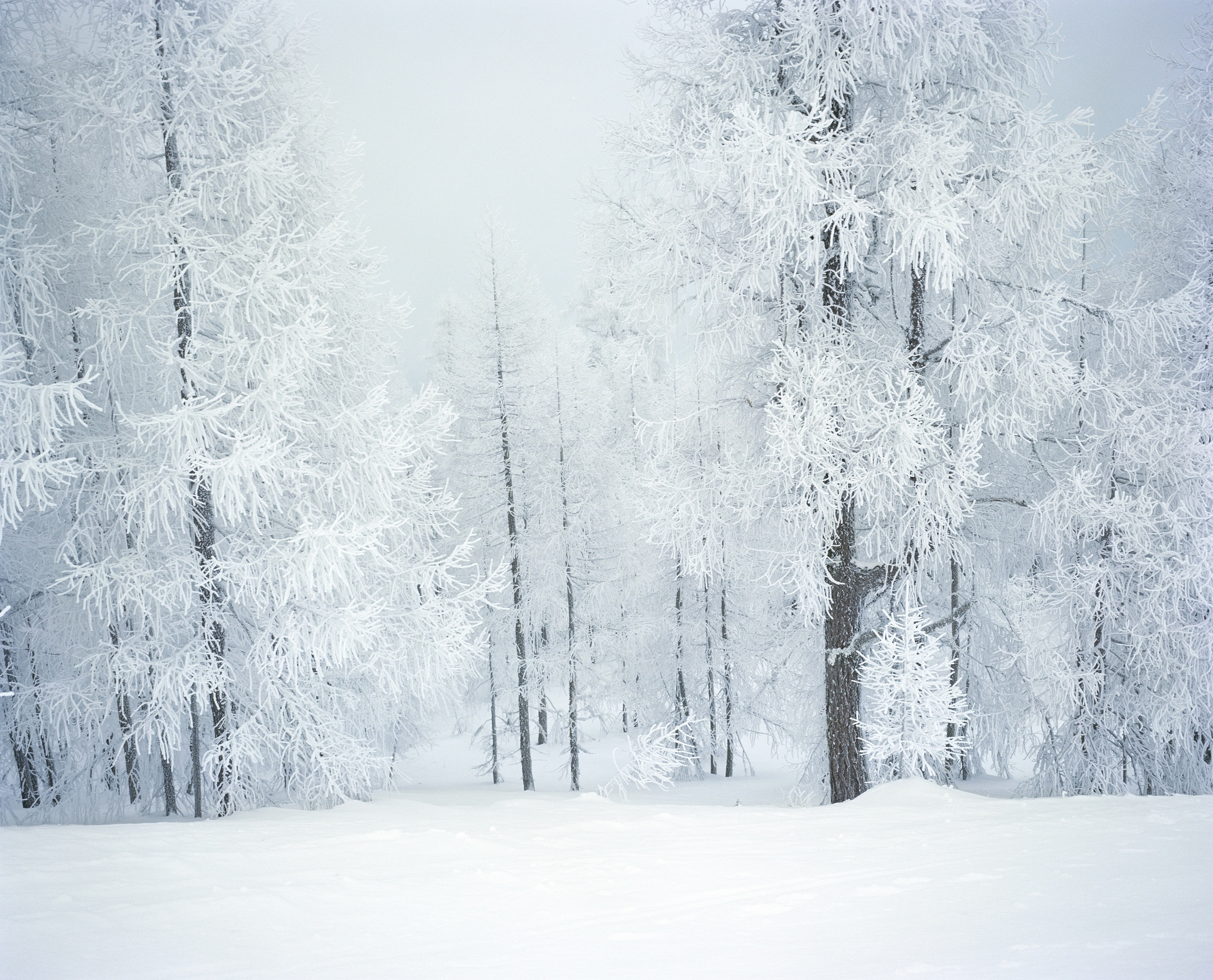 Frosted Trees II, 2009