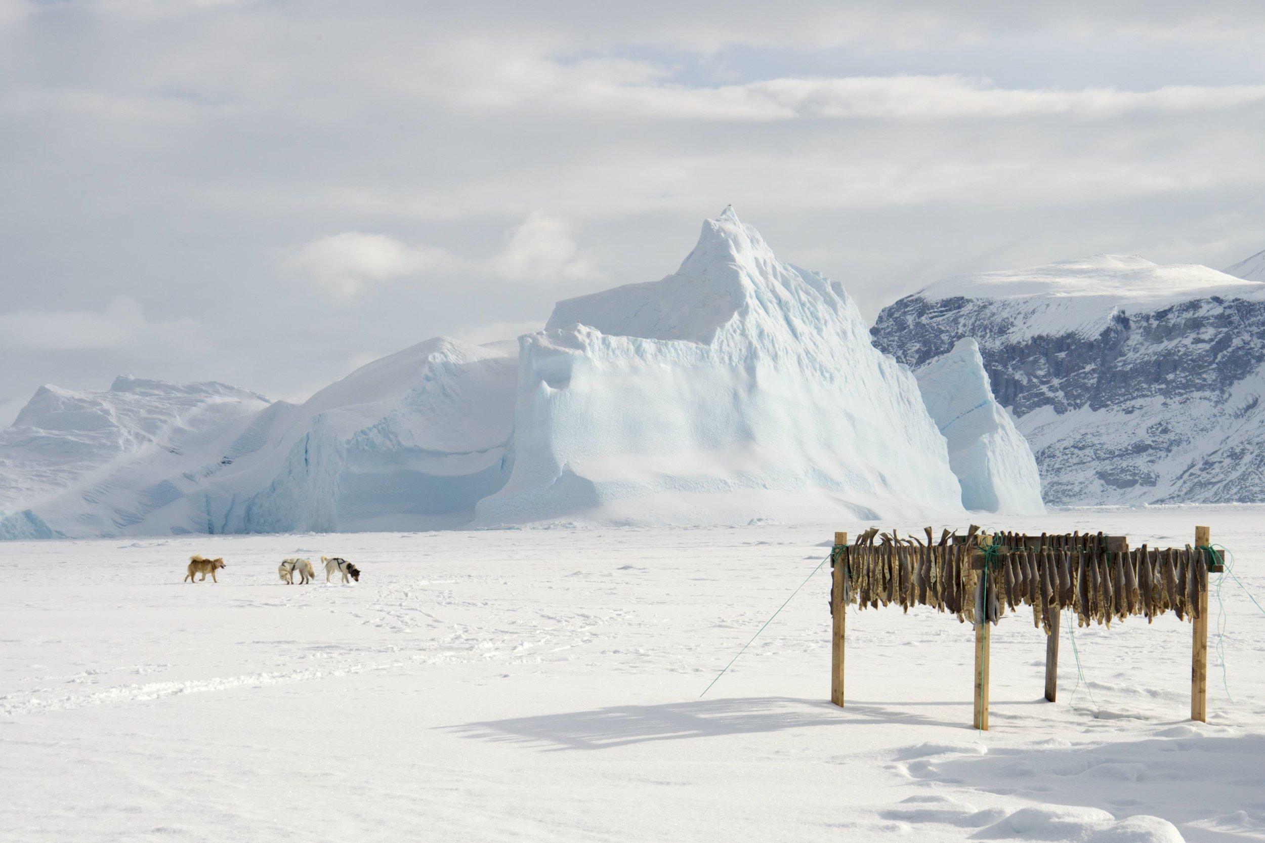 Drying Cod, Greenland, 2017