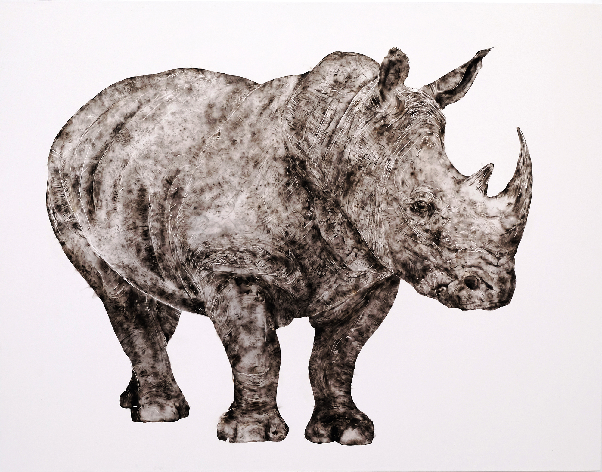 Sheila Gallagher   Rhino  2015 smoke on canvas 56 x 72 inches