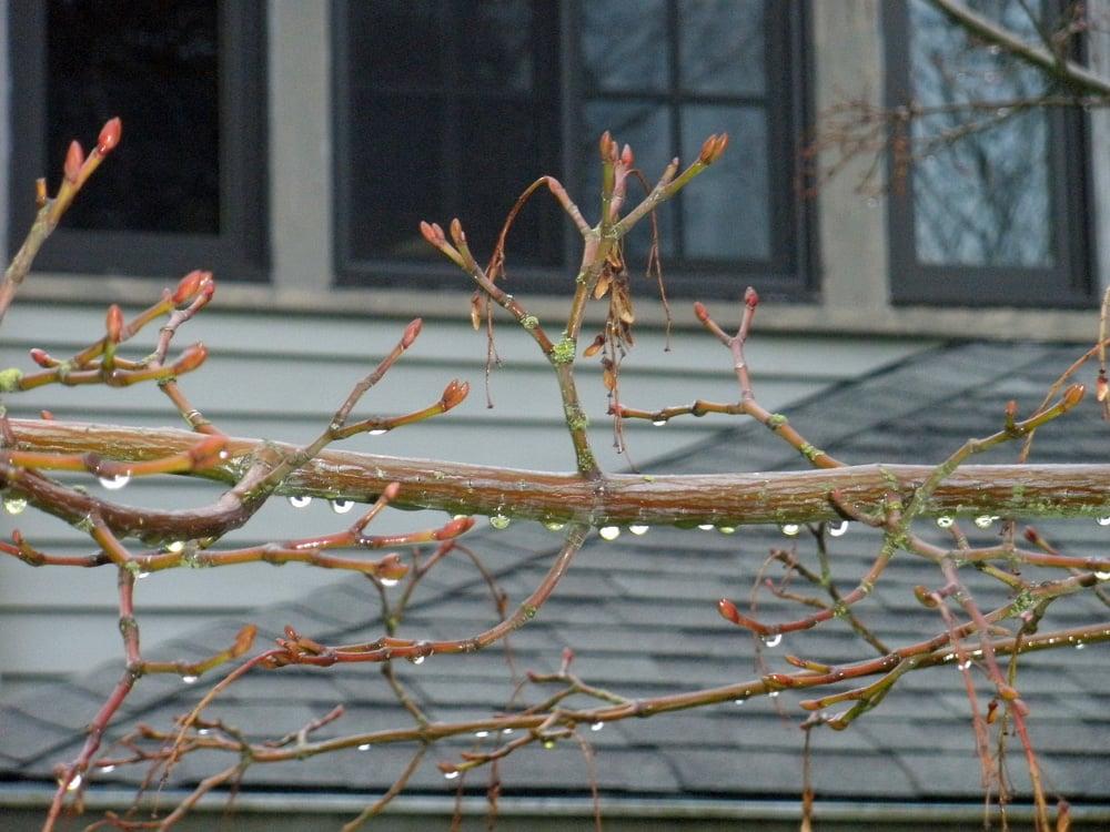 Winter rain drops glisten. Oregon sunshine!