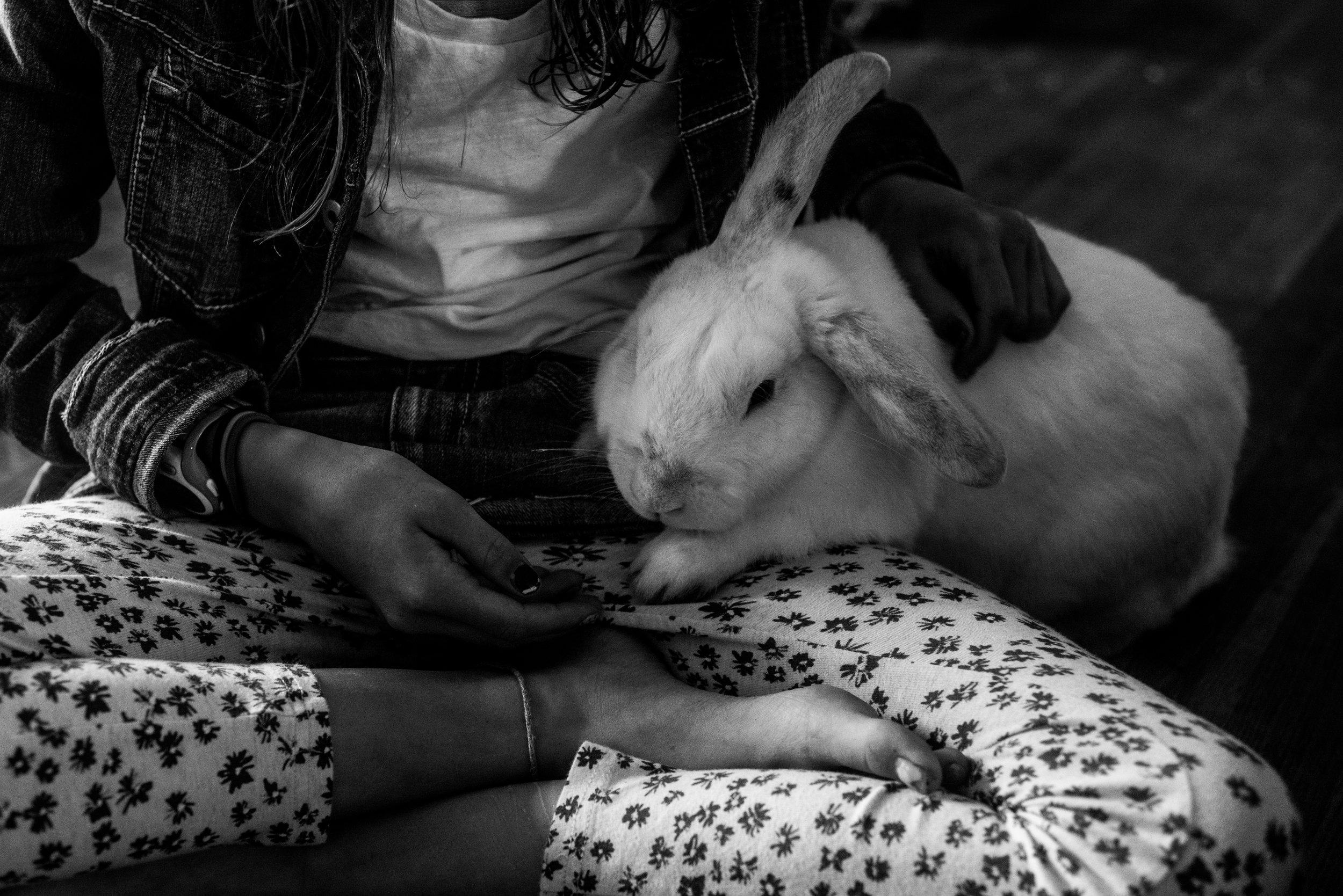 04 rabbit northern virginia photographer-1.jpg