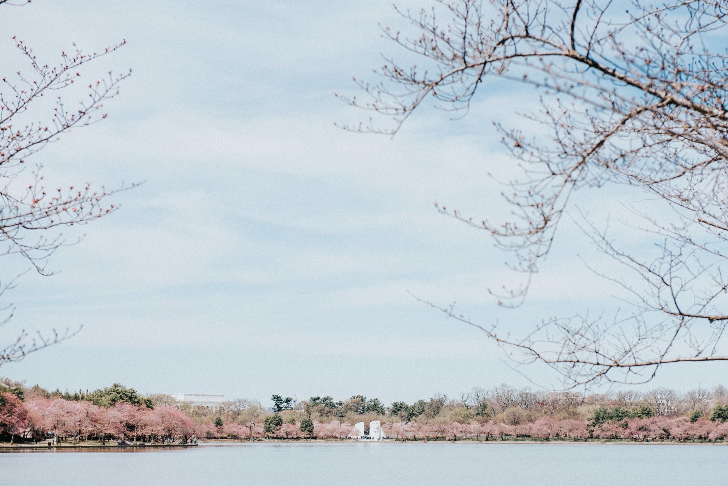 dc tidal basin-64.jpg