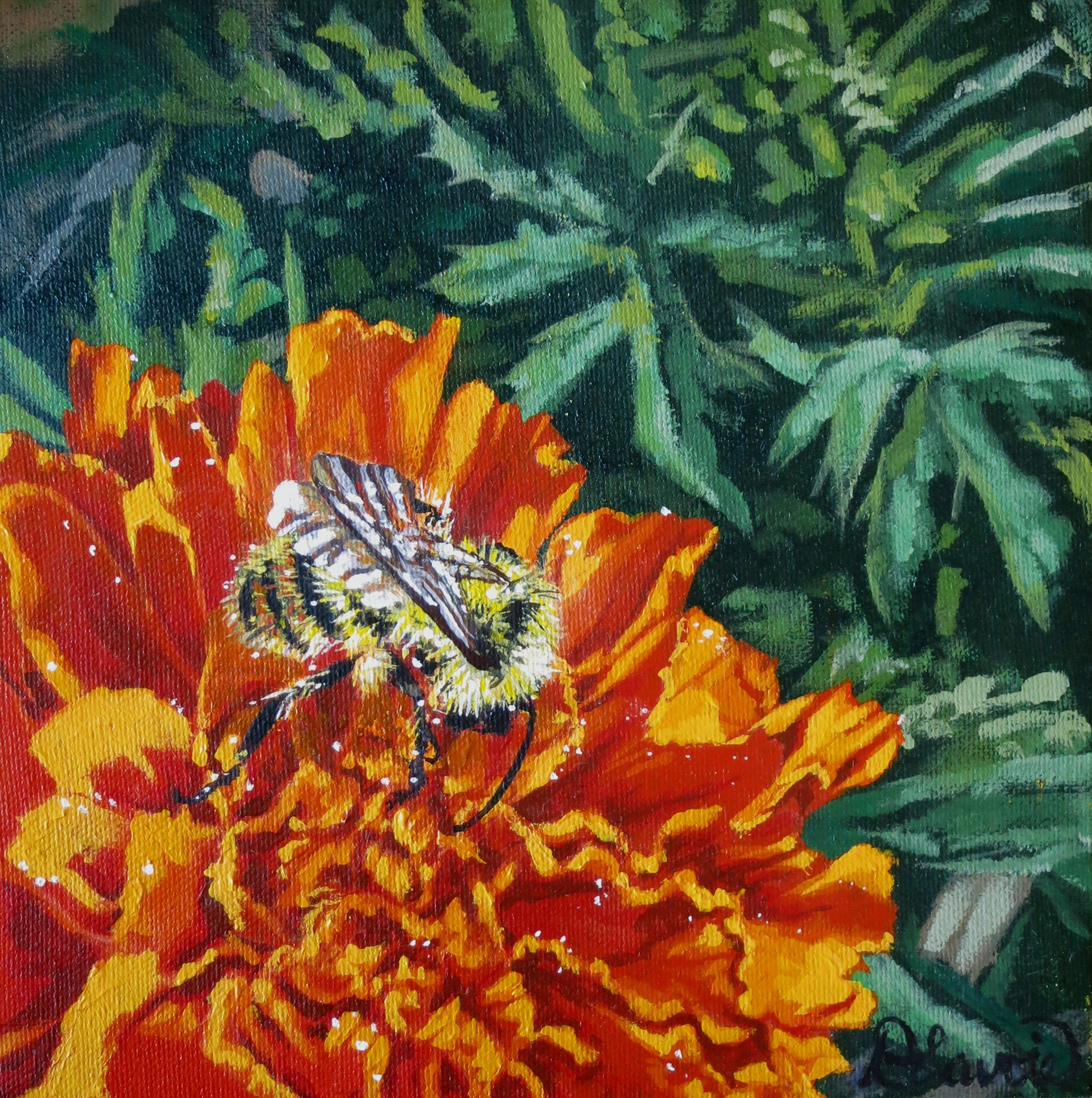 """Bee Enduring           Acrylic on Canvas - 8"""" x 8""""    Both the original and limited edition prints are available.   I know marigolds do not attract insects. While brainstorming a title for this piece, I read that bees wouldn't like them either. Hmmm....funny my marigold seemed to attract this guy! I love the brilliant colours shining from this scene - painting it was a joy."""