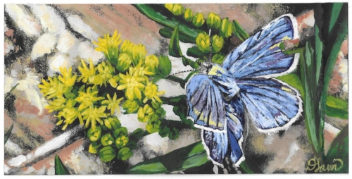 Indigo Inspiration         Limited Edition Print on Watercolour Paper - $30  The amazing blue of the beautiful butterfly bouncing off these bright yellow wild flowers inspired me while hiking over 8 years ago and then again when my daughter chose a similar image on an oracle card this past year. I knew it was time to do something with it!The butterfly speaks of transformation, creativity and freedom while the yellow flowers depict friendship, compassion, trust and respect.  This particular butterfly featured in  Indigo Inspiration  has a piece of its wing missing;however, butterflies are not as fragile and dainty as they seem to be. Although their wings and scale do not regrow, they can fly with pieces of their wings missing!