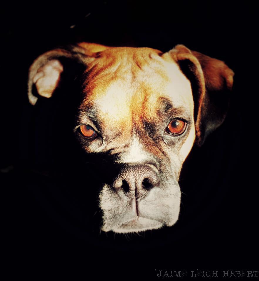 My boxer, Diesel