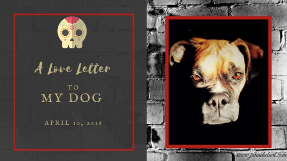 Dog Blog Header (1).jpg