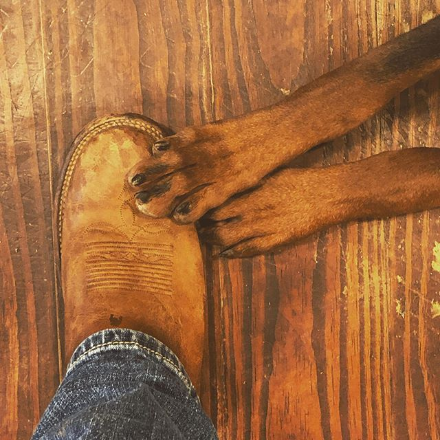 Looks like two legged mammals aren't the only ones who like @justinboots_ 🐾