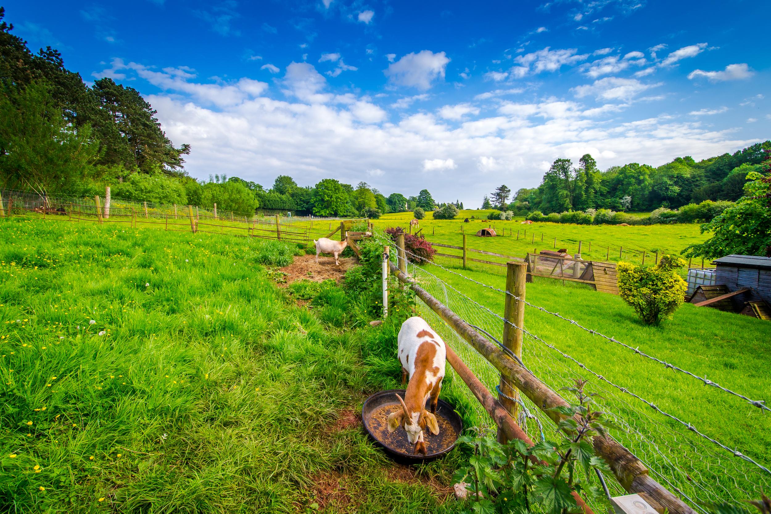 Kellogg - travel - England 2014-0434.jpg