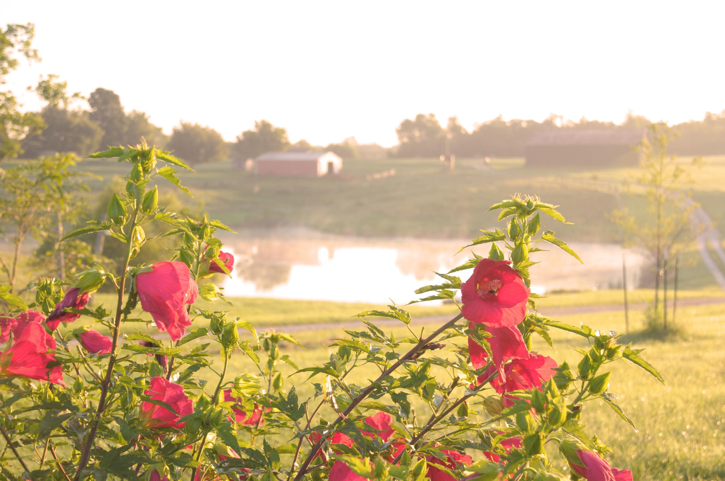 Farm_flower1.jpg