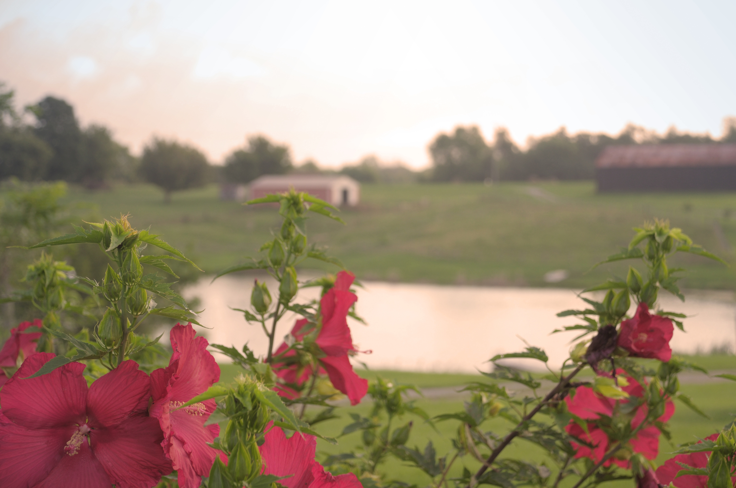 Farm_flower2.jpg