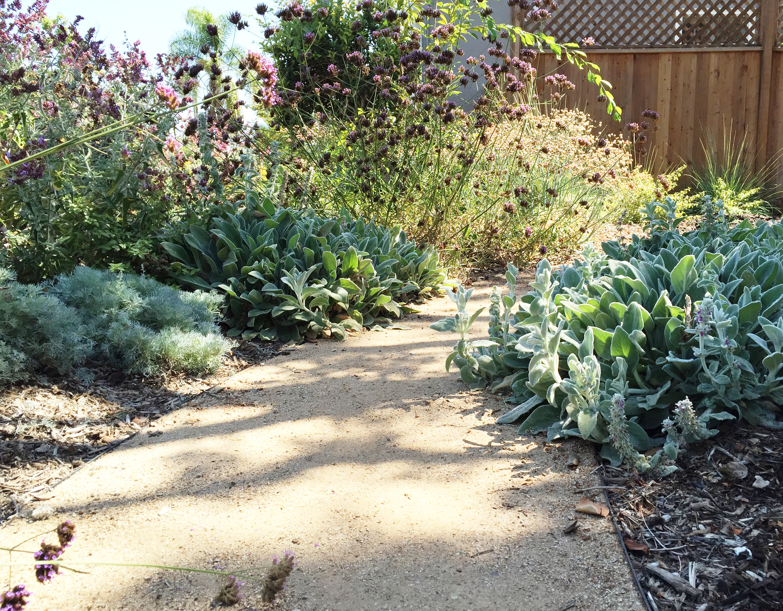 mixed plantings.jpg