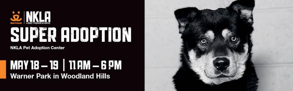 Pet_Adoption_Special_Event_ATM_Rental_Woodland_Hills_California.jpg